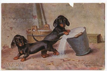 Dachshund - Jamnik - psotnik 1912