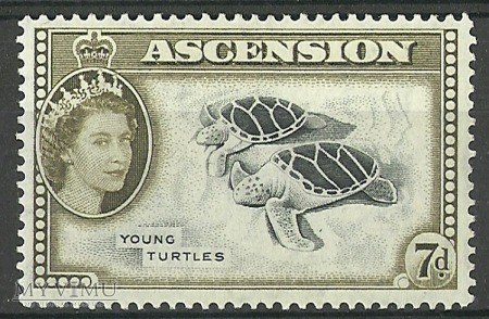 Young turtles