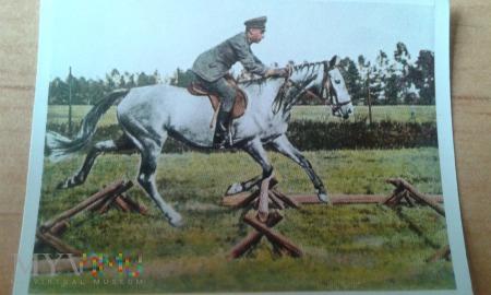 szkolenie konia kawaleria