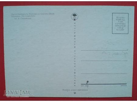 Duże zdjęcie 1983 Szympans ZOO karta Maximum Maksimum