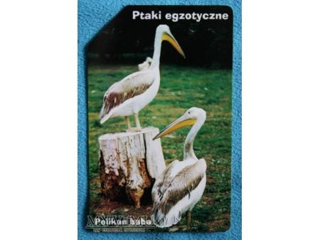 Ptaki Egzotyczne 4(10)