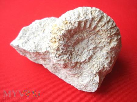 Amonit 20