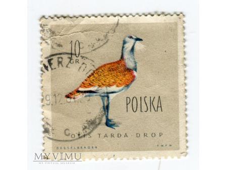 1960 OTIS TARDA DROP ptak znaczek Polska