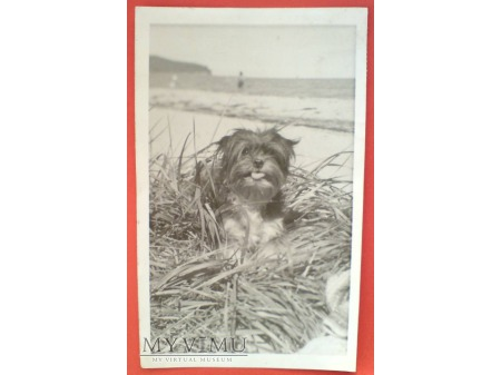 1949 Pies i Podkowa Leśna pocztówka B.Bierut
