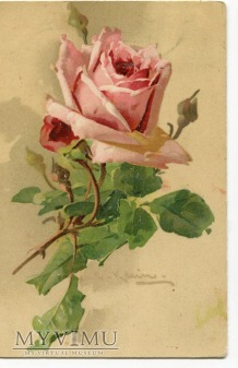 1907 Catharina C. Klein kwiaty róże