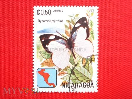 Duże zdjęcie Motyl Dynamine myrrhina