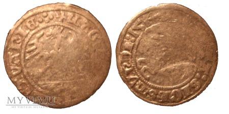1/2 grosza Zygmunt I Stary I 1514