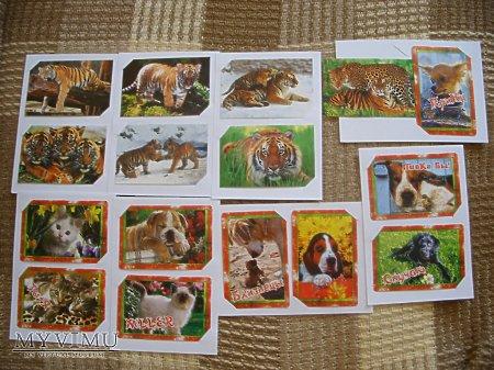 Duże zdjęcie Tygrysy, psy i koty