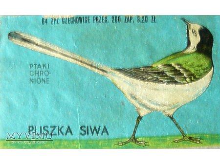 PLISZKA SIWA