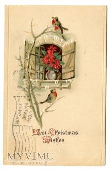 Duże zdjęcie Ptaszki Wesołych Świąt z Ameryki