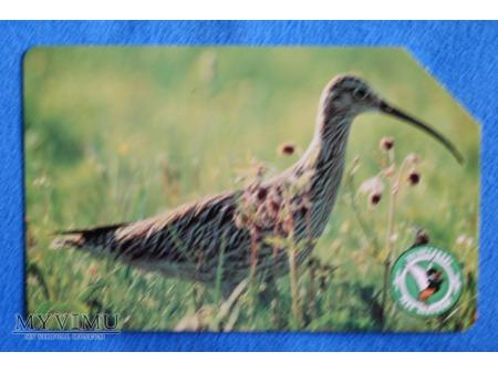 Duże zdjęcie Biebrzański Park Narodowy 3 (10)