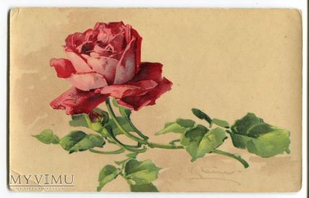 1906 Catharina C. Klein kwiaty róże roses