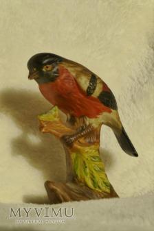 Ptaszek- Gil mały