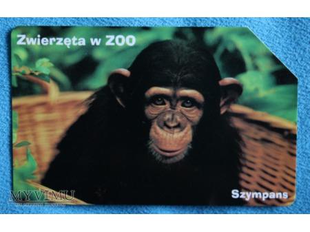 Zwierzęta w ZOO 1 (10)