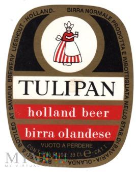 Duże zdjęcie Tulipan