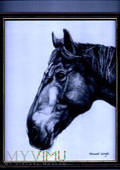 Grafika Koński łeb - Stewart Wright