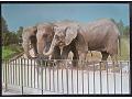 Słoń indyjski i afrykański
