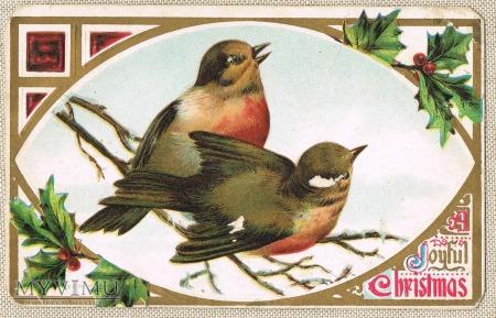 1909 Wesołych Świąt ptaszki ostrokrzew
