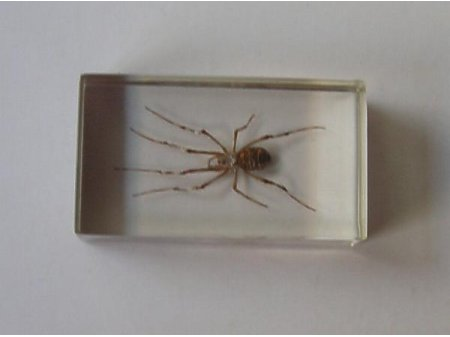 Owady i pajęczaki 11