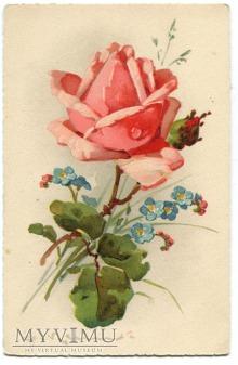 Catharina C. Klein Róże kwiaty Roses Flowers