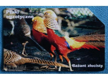 Ptaki Egzotyczne 5(10)