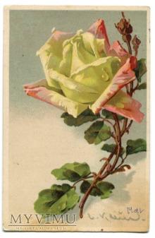 Catharina C. Klein kwiaty róże roses