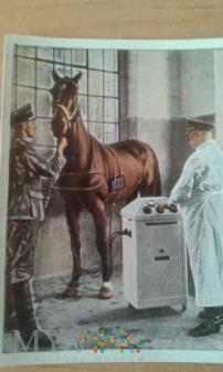 koń u weterynarza 2