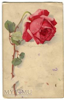 Catharina C. Klein Róże Roses Meissner & Buch