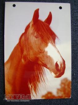 koń arabski