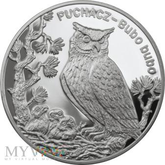 20 ZŁ - 2005 Puchacz