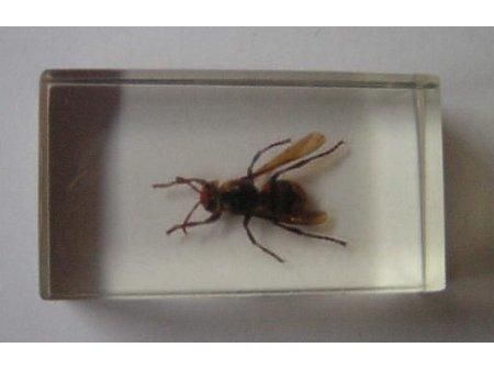 Owady i pajęczaki 5