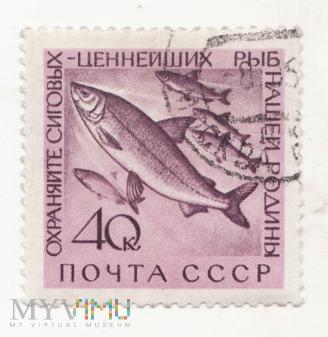 Znaczek pocztowy -Zwierzęta 50