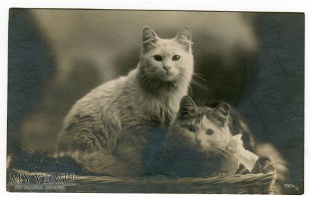 Były sobie kotki dwa...pocztówka z Francji