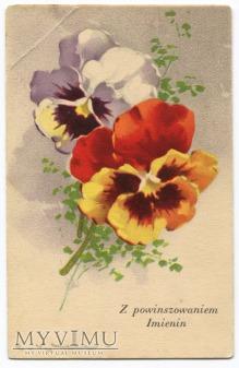 Catharina C. Klein kwiaty Flowers Bratki Pansy