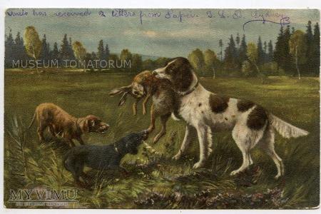 Dachshund - Jamnik myśliwy - 1910